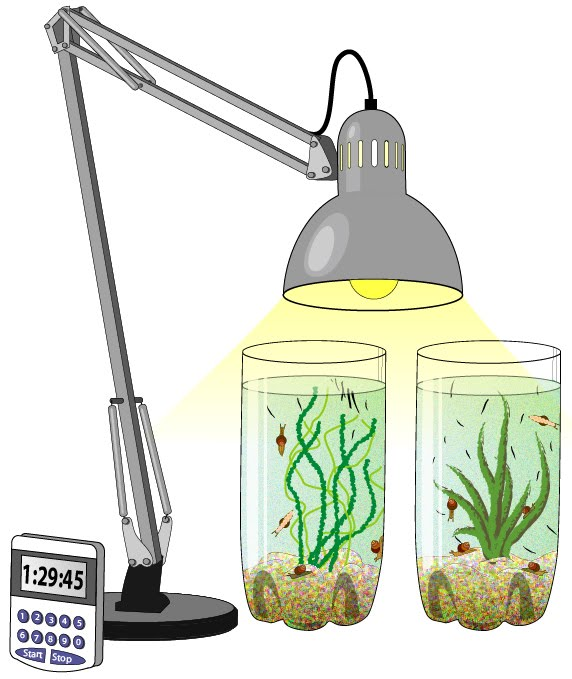 Image demonstrating the experiment setup