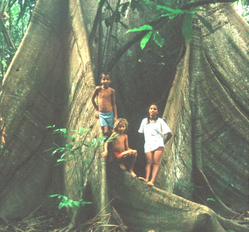 Kids standing on a tree trunk