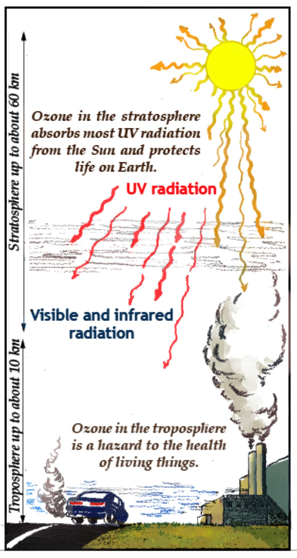 Ozone in the stratosphere and the  troposphere