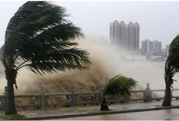 Palm trees buffeted by storm surge