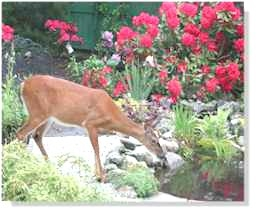 Deer eating flowers in a garden