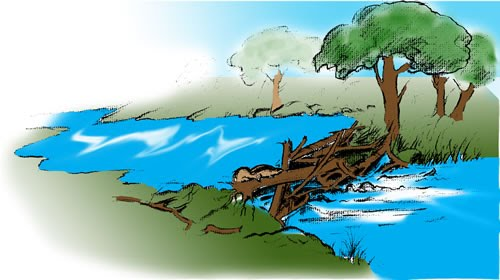 Illustration of a beaver dam