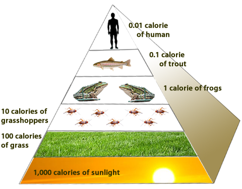 Diagram of a food pyramid