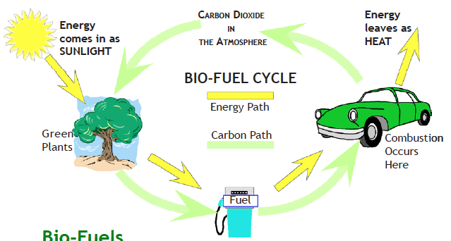 The biofuel cycle explained