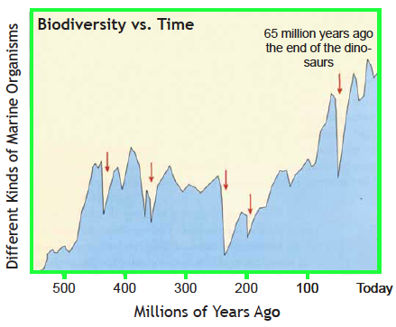 Graph showing changing biodiversity over time