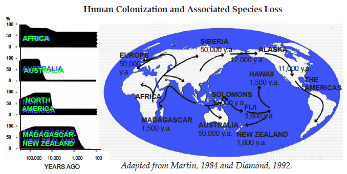 Human colonization and associated species loss
