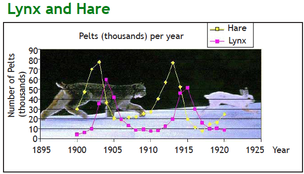 The lynx and the hare relative populations