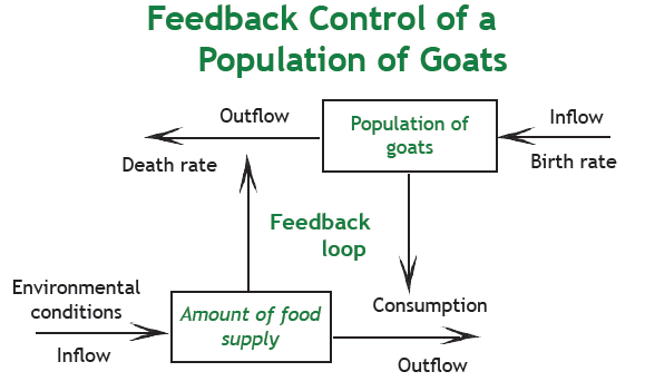 Feedback loop on goat island